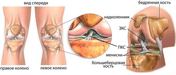 Нестабильный коленный сустав височно-нижнечелюстной сустав анатомия ботан