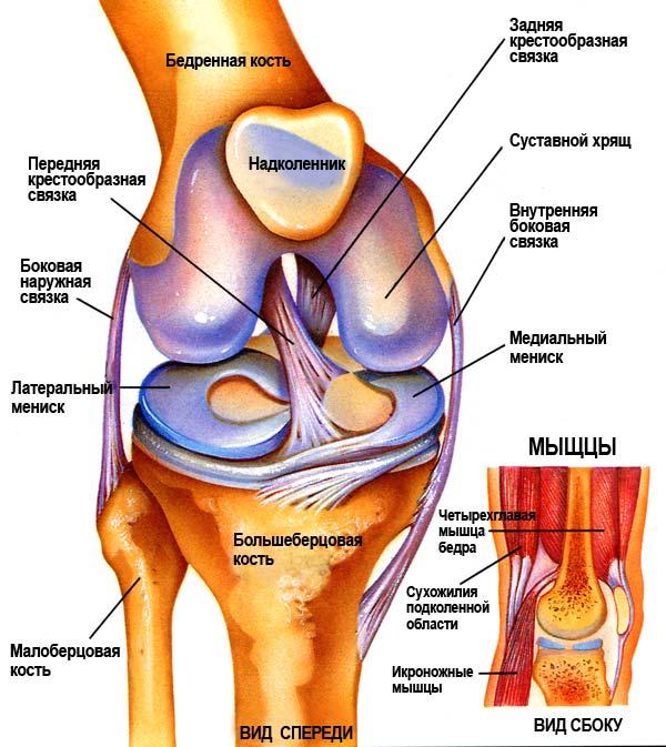 ...здорового коленного сустава, но возврат к максимальным возможностям...